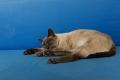 Le chat de Casapueblo