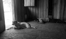 La sieste des gauchos