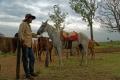 Sidni prépare les chevaux dans le corral