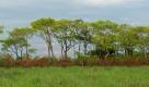 Verts pâturages du Pantanal sur la propriété de César
