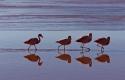 Ambiance matinale chez les Flamants de la Laguna Colorada