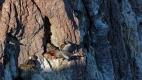 Cormorans gris dans la Ria Deseado