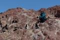 Marion et les Gorfous sauteurs ,  Isla Pingüino (Argentine)