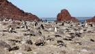 Manchots de Magellan, Isla Pingüino (Argentine)