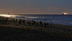 Manchots de Magellan au clair de lune, Cabo Virgines (Argentine)