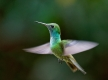 Colibri au Jardin de los Picaflores de Puerto Iguazú