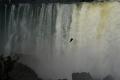 Daniel retrouve ses amis les vautours aux Chutes d'Iguazú