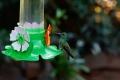 On vous dévoile la face cachée. Cependant la vélocité de ces petits oiseaux rend difficile la capture photographique, deuxième difficulté : faire en sorte que ces mangeoires super kitch soient hors champ !