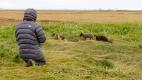Aymi photographie les renardeaux