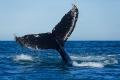 La queue de la baleine