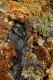 Les minéraux issus des sources d'eau chaude colorent le sol de jaune, de rouge :