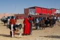 Souk au chameaux de Guelmim