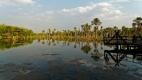 Lagoa das araras au nord du Pantanal accueille chaque soir plusieurs espèces bariolées de aras bruyants qui viennent nicher pour la nuit