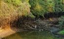 Végétation lacustre du Pantanal