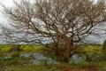 Végétation typique du Pantanal