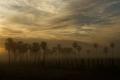 Paysage du Pantanal sud