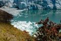 """C'est la fin du printemps au glacier Perito Moreno, les """"notros"""", d'un rouge flamboyant, sont en fleurs"""