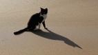 Ombre de chat au port d'Aftess Rkount