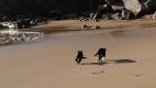 Deux chats se bagarrent sur la plage