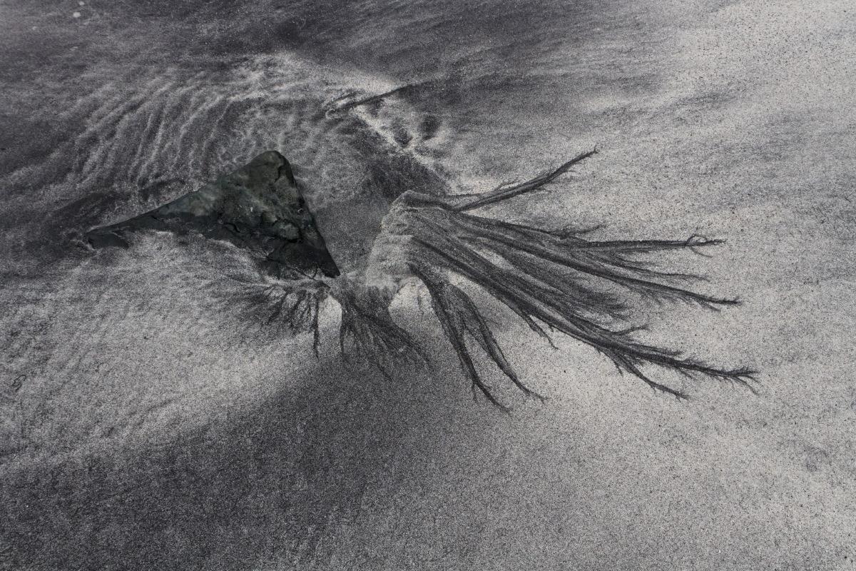 Baie de Talisker : ceci n'est pas une algue...