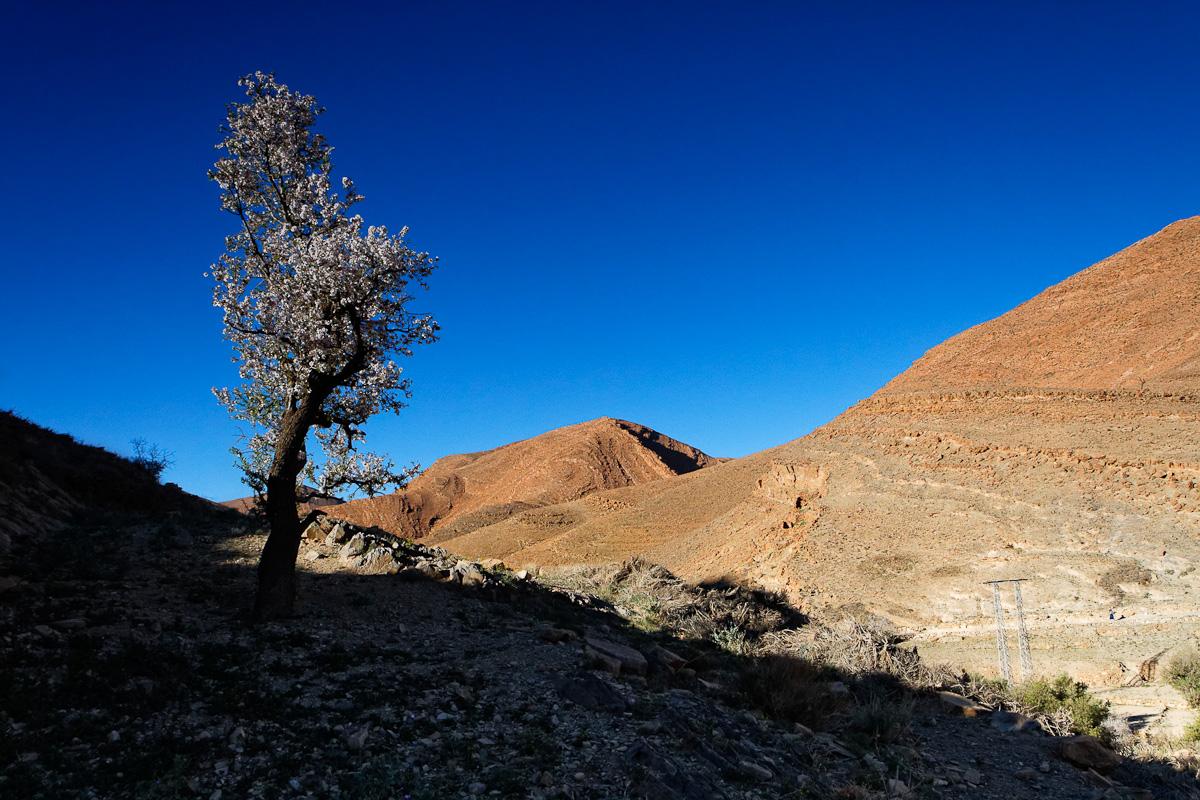 2014_D_Maroc_1688_L