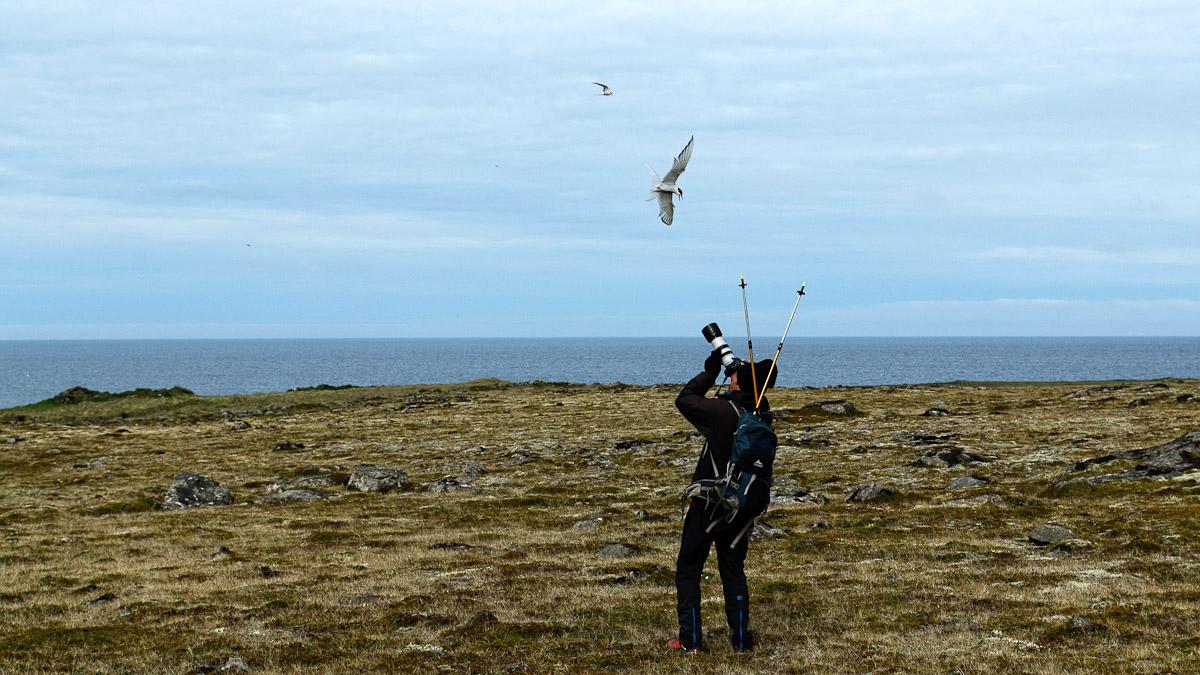 2014_M_Islande_1871_L