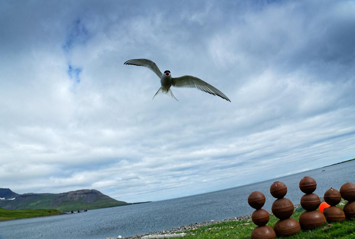 2014_M_Islande_2574_L